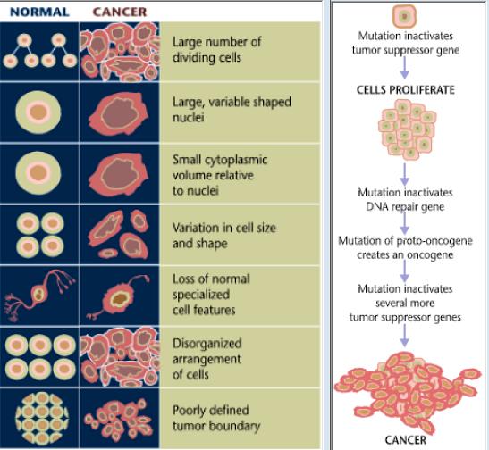 cancer types benign tratament al parazitului alergic
